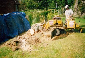 Alton Tree Care - Stump Grinding Liphook Fourmarks Alresford Basingstoke Bordon Farnham Four Marks Petersfield Ropley Selborne Whitehill Winchester
