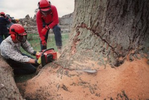 Alton Tree Care - Tree Surgery Wavely Abbey Fourmarks Alresford Basingstoke Bordon Farnham Four Marks Petersfield Ropley Selborne Whitehill Winchester