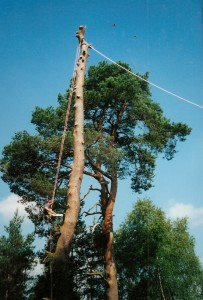 Alton Tree Care - Tree Surgery Farnham Surgeons Fourmarks Alresford Basingstoke Bordon Farnham Four Marks Petersfield Ropley Selborne Whitehill Winchester