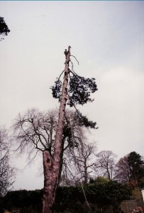 Alton Tree Care - Tree Surgery Liphook Surgeons Fourmarks Alresford Basingstoke Bordon Farnham Four Marks Petersfield Ropley Selborne Whitehill Winchester