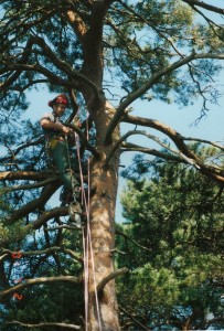 Alton Tree Care - Tree Surgery Dorking Surgeons Fourmarks Alresford Basingstoke Bordon Farnham Four Marks Petersfield Ropley Selborne Whitehill Winchester